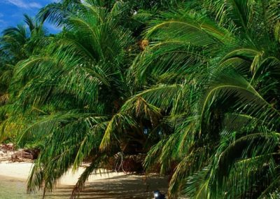 Custom Panama Travel Package (10 Nights) – Panama City and the Caribbean Beaches Vacation Package