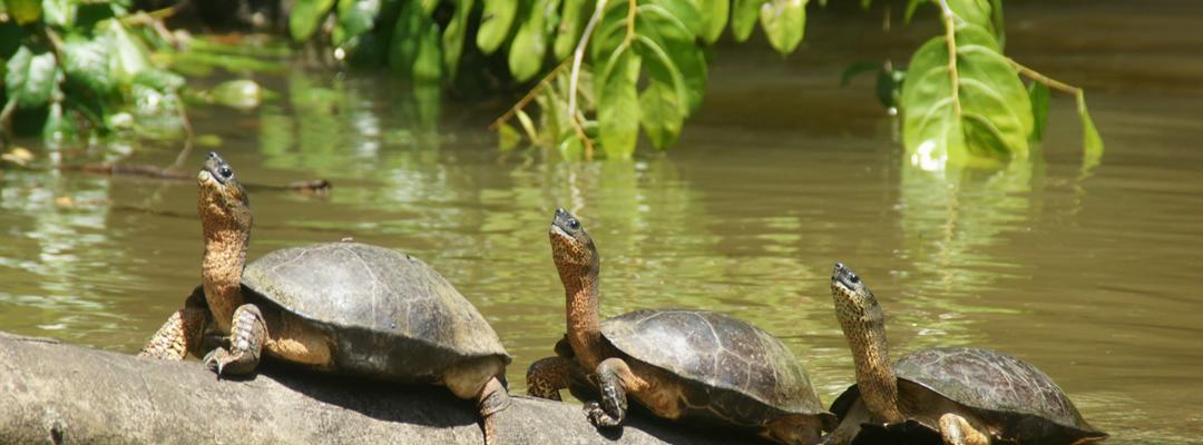 Tortuguero-National-Park-Costa-Rica-02